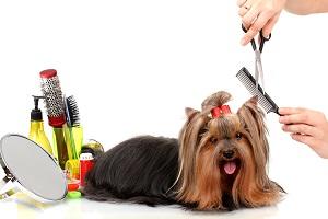 pet_grooming