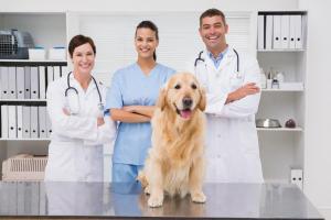 veterinarians_dog_boarding